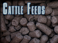 CATTLE FEEDS